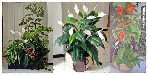Plantas artificiales inova decora - Plantas artificiales para decoracion ...