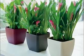 DecorKLASS plantas artificiales