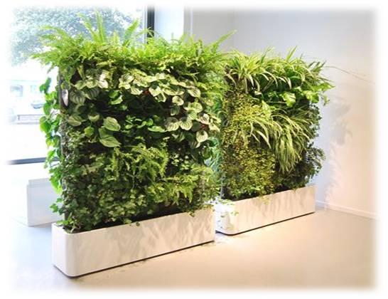 Muros verdes inova decora for Plantas para muros verdes verticales