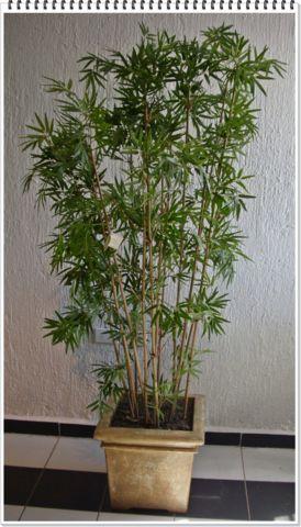 Bambu plumoso varas decorklass jardiner a y decoraci n - Macetas con bambu decoracion ...