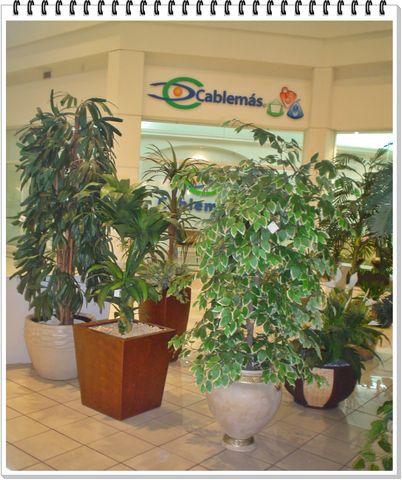 Renta de plantas para eventos decorklass jardiner a y for Jardineria y plantas