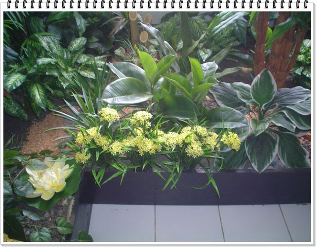 Ixoras y plantas varias inova decora for Plantas artificiales para interiores